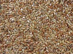 Закупаем семена льна оптом