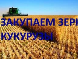 Закупаем зерно Кукурузы