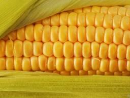 Закупка кукурузы, подсолнечника, сои, пшеницы и др. культур