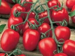 Закупка томатов крупным оптом