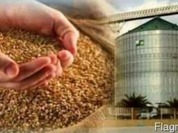 Закупки зерновых культур
