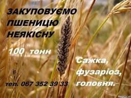 Закуповуємо пшеницю неякісну