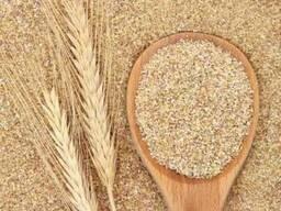 Зародыш пшеницы