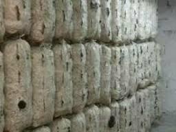 Заросшие грибные блоки вешенки