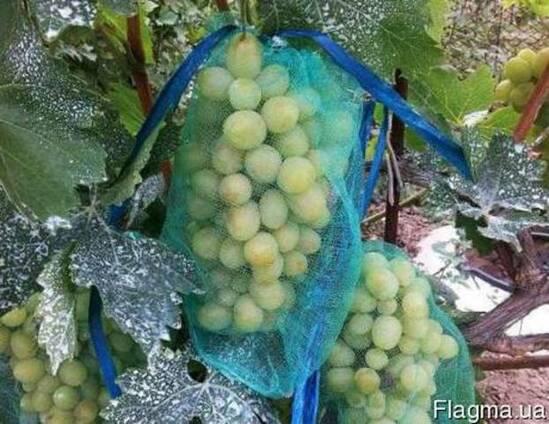 Защитная сеточка - рукав для винограда