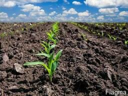 Здам в оренду землі сільхозпідприємства