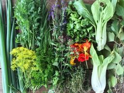 Зелень: руккола, мизуна, пак-чой, овощная хризантема. ..