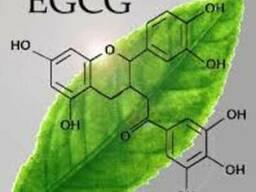 Зеленого чая экстракт 90%