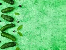 Зеленый двусторонний, матовый студийный фон для товара. ..