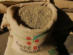 Зеленый кофе (необжаренный) Arabica Brazil Santos scr. 17/18