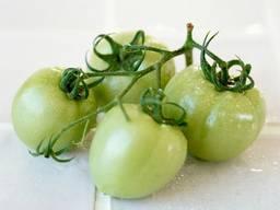 Куплю зеленый помидор