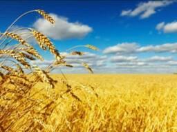 Зернові за найкращими цінами!