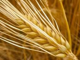 Зерновые отходы