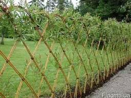 Живая изгородь,забор декоративной,живой забор