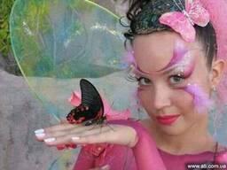 Живые бабочки Днепропетровск, живые тропические бабочки