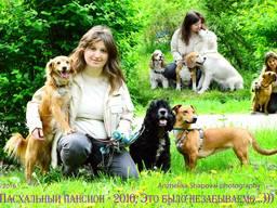 Зоогостиница/пансион/гостиница/передержка для собак (животных), выгул собак.
