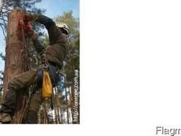 Зрізання дерев