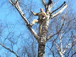 Спилить дерево удалить дерево , обрезать дерев