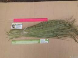 Зубровка душистая трава