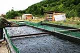 Сербия Рыб Экспорт, ФЛП